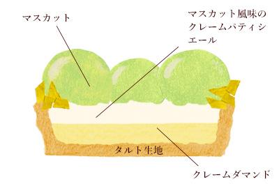 タルトレットマスカット断面図イラスト